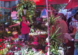 Flower Seller, Condesa Market