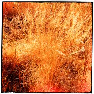 Grass at Medow Lake
