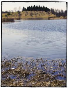Morton Arboretum Spring VII