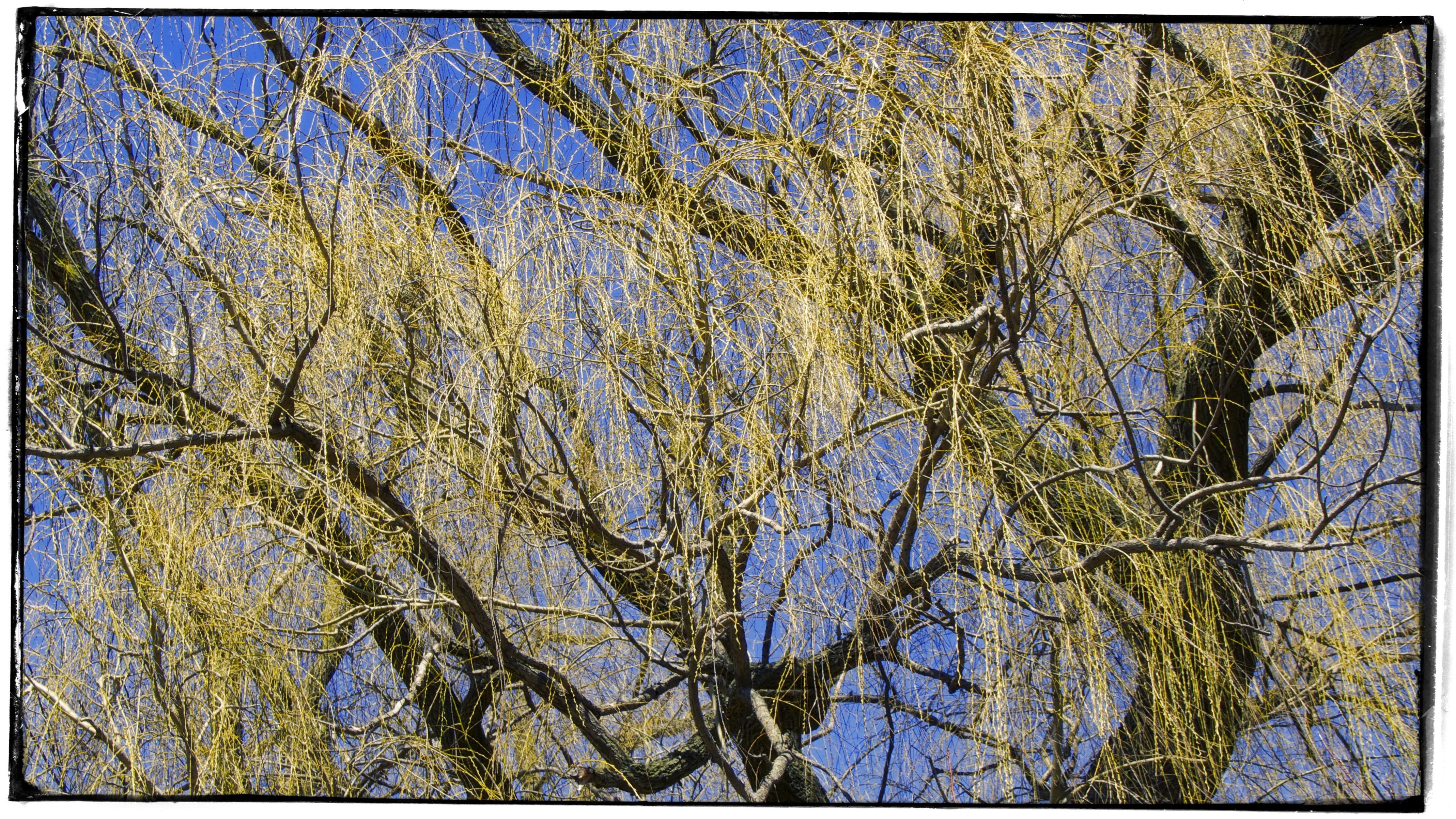 Morton Arboretum Spring IV