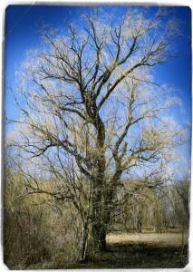 Morton Arborebum Spring V