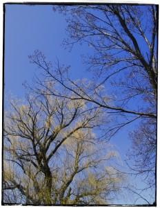 Morton Arborebum Spring VI